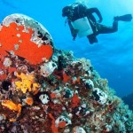 Κατάδυση στο Θαλάσσιο Πάρκο Νησιώπης